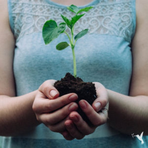 Regenerative & Sustainable: What is the Difference?